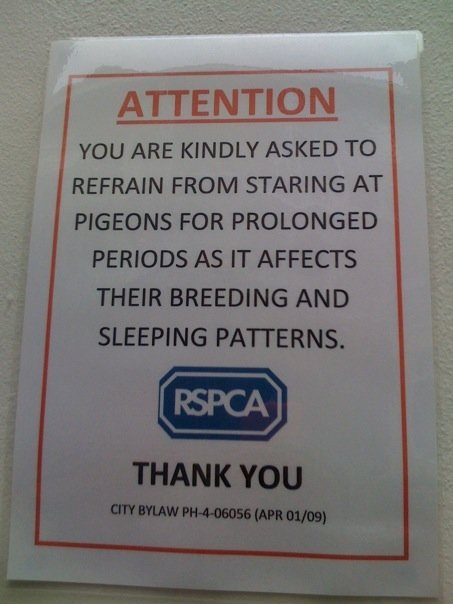 don't stare atpigeons